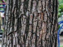 老木头和纹理详述 图库摄影