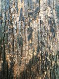 老木头纹理背景的 免版税库存图片