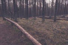 老木trenshes在拉脱维亚-葡萄酒减速火箭的作用 免版税库存图片