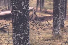 老木trenshes在拉脱维亚-葡萄酒减速火箭的作用 库存图片