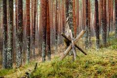 老木trenshes在拉脱维亚 免版税库存图片