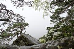 老杉树和岩石与灰色薄雾在背景中 库存照片