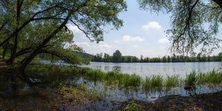 老杨柳倾斜了在河的泥泞的河岸 阿尔汉格尔斯克州村庄  俄国 免版税库存照片