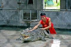 老板和鳄鱼显示 库存图片