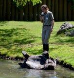 老板帮助乌龟 免版税库存图片