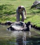 老板帮助乌龟 免版税库存照片