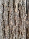 老板条木头 库存照片