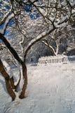 老果树园在冬天 免版税库存图片