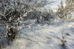 老果树园,用雪盖的树 免版税库存照片