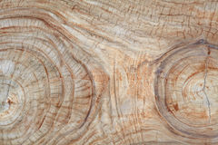 老柚木树木头树桩 库存图片
