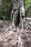 老树和玛雅废墟加点在科苏梅尔的海岸 免版税库存照片