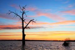 老树在日落风景的湖 免版税库存照片
