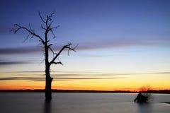 老树在日落风景的湖 免版税图库摄影