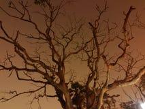 老树在晚上里 免版税库存照片