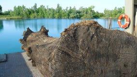 老树在浮船说谎 免版税图库摄影