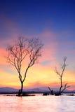 老树在湖 库存图片