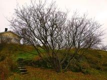 老树在秋天公园 库存图片