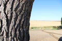 老树在西班牙的农场 免版税库存照片