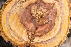 老树干横向裁减的背景  图库摄影