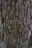 老树干纹理  免版税库存照片