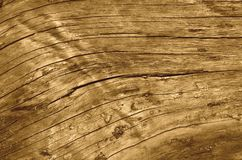 老树干风化了破裂的纤维组织,乌贼属颜色 免版税库存照片