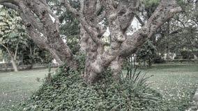 老树干 库存照片