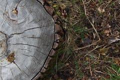 老树树桩  图库摄影
