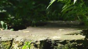 老树桩在夏天公园 库存图片