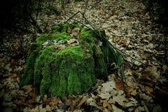 老树桩在森林和叶子里 库存照片