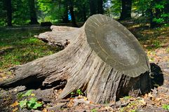 老树桩在秋天公园 图库摄影