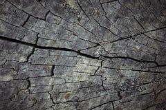 老树桩的表面纹理崩裂了 库存照片