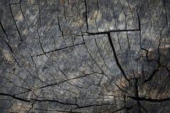 老树桩的表面纹理 免版税库存照片