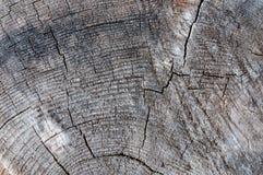 老树桩纹理 免版税库存照片