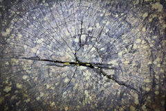 老树桩纹理  图库摄影