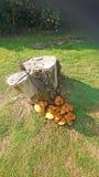 老树桩结构树 免版税图库摄影