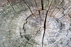老树桩,与镇压的美好的木纹理背景 库存照片
