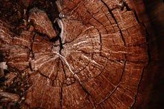 老树桩结构树 库存照片