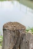 老树桩 库存图片