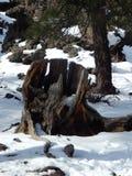 老树桩 库存照片