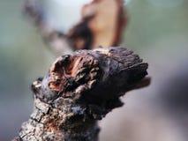 老树残破的干燥分支在与秀丽自然的庭院区域 免版税库存照片