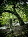 老树河和常设石头 库存照片