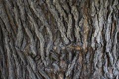 老树皮纹理,背景 图库摄影