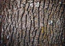 老树皮纹理 图库摄影