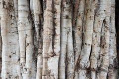 老树皮自然纹理背景 库存图片