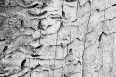 老树-细节的死亡零件 库存照片