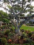 老根结构树 库存例证