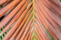 老棕榈叶 库存图片
