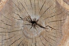 老棕色破裂的树桩 免版税库存照片