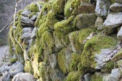 老森林公路在阿尔卑斯 生苔老石墙 免版税图库摄影