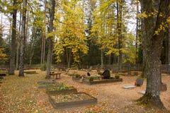 老森林坟园 库存图片
